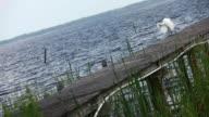 Heron at Waterside video