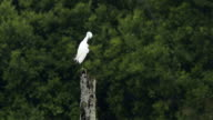 Heron standing on some dead branches looking out over a pond. video