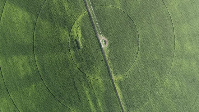 High aerial view of irrigation patterns in corn field video