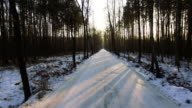 High angle view of winter snowy forest. Snow laying on the ground video