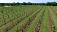 High Diagonal Drone Flying Across Vineyard Aerial Wine to Market or Farm to Market in Austin Texas video