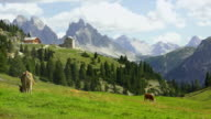 High Mountain Pasture In The Dolomites video