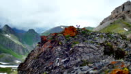 high mountain rocks, flowers and moss video