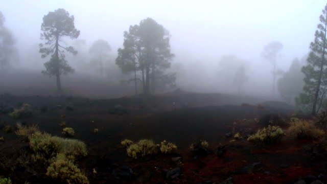 Highland moody landscape. video