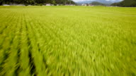High-speed movement of the paddy fields in the drone 2 video