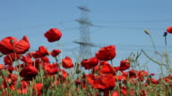 High-voltage lines and poppies video