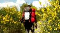 Hiker walks up cobblestone path past flowers video