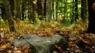 Hikers climb over a rock in the woods. video