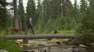 Hikers cross a stream using a fallen tree video