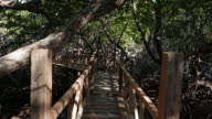 Hiking footpath in mangrove forest, Philippines video