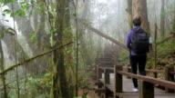 Hiking woman trekking in rainforest jungle video