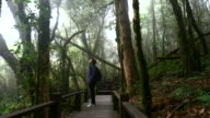Hiking young woman trekking in the rainforest, 4K (UHD) video