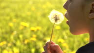Сhild and dandelion video