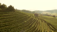 AERIAL Hillside vineyards basking in sunshine video