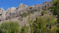 Hillside with green trees. Crimea. Zelenogorie video