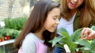 Hispanic mother teaches her young daughter about different types of plants in garden center or farmer's market video