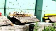 Hive + Audio - Camera pan video