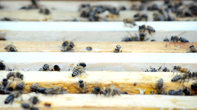 Hive with bees. video