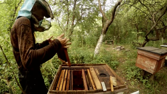 Hiver Pull Out Frame From Hive Under Bees Fly Apiary in Forest video