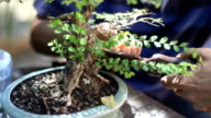 Hobbies planted in bonsai pots. video
