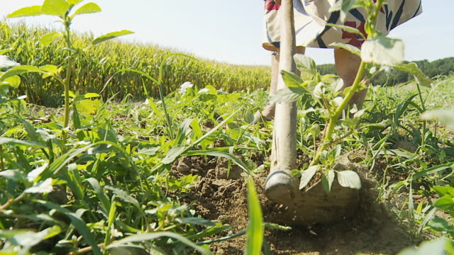 HD SLOW MOTION: Hoeing Weeds In The Field video