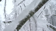 Holding A Twig Covered In Ice video