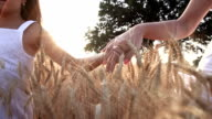 HD SUPER SLOW-MOTION: Holding Hands In Golden Wheat video