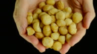 Holding macadamia. Front view. video
