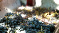Home Winemaking video