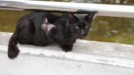 Homeless cat video