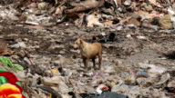 Homeless dirty dog in Garbage video