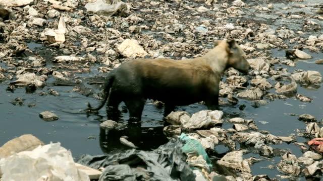 Homeless dirty dog video