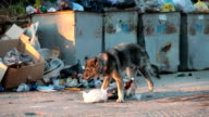 homeless dog digging in the waste video