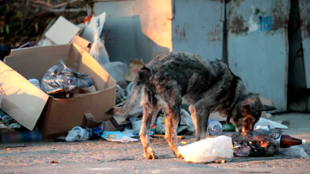 homeless dog feeding into garbage can video