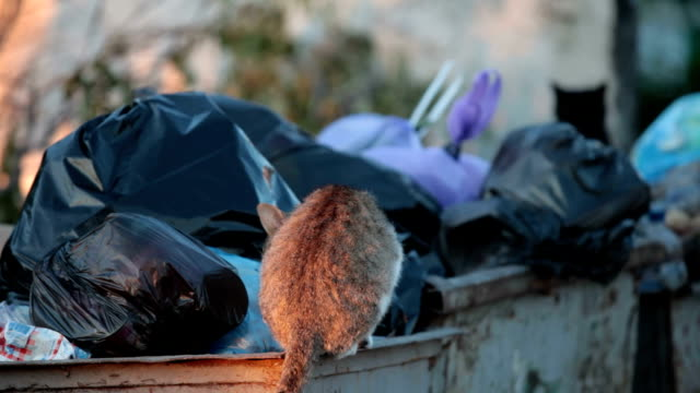 homeless hungry cat in garbage bins video