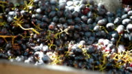 Homemade Winemaking video