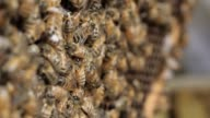 Honey bee macro footage of bee hive and honey production beekeeper video