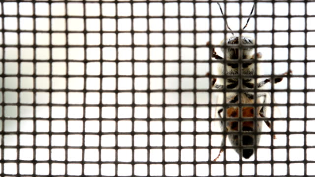 Honey bee on a mesh video