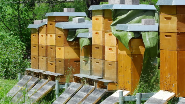 PAN Honey Bees Arriving At The Beehive (UHD) video