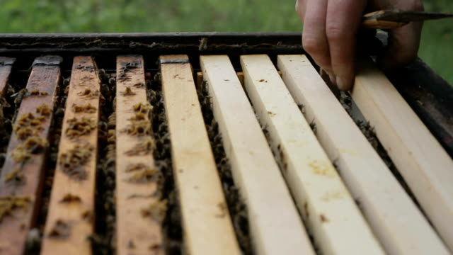 Honey Comb with Bees Pulled out of Apiary HD video