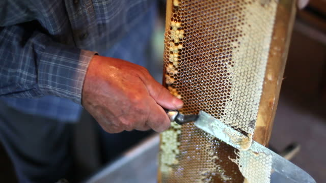 Honeycomb. video