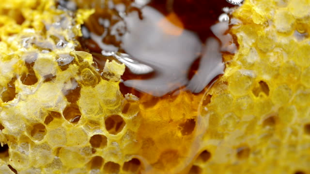 Honeycomb video