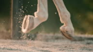 SLO MO Hooves of a galloping horse video
