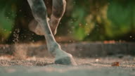 SLO MO DS Hooves of a trotting horse video
