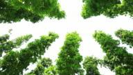 HD Hop Garden Agaist Sky (Panning) video