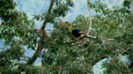 Hornbill on tree video