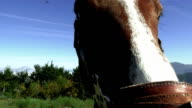 Horse and horsewoman detail video