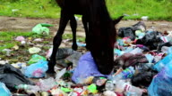 Horse at dump waste video