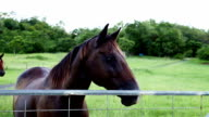 Horse at Gate video