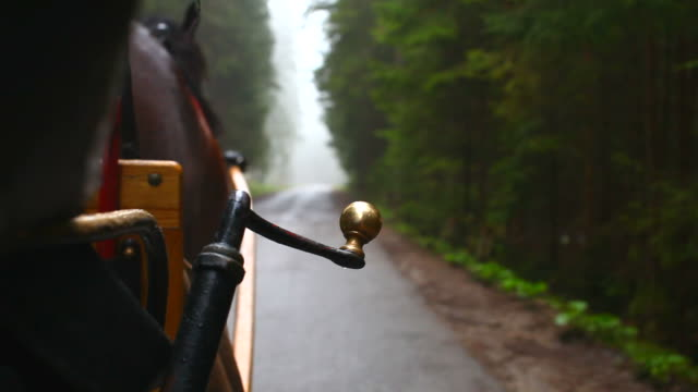 Horse carriage video